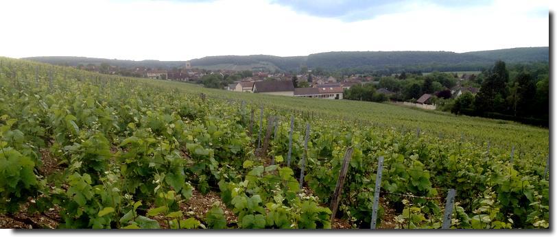 Champagne Baroni - Celles-sur-Ource