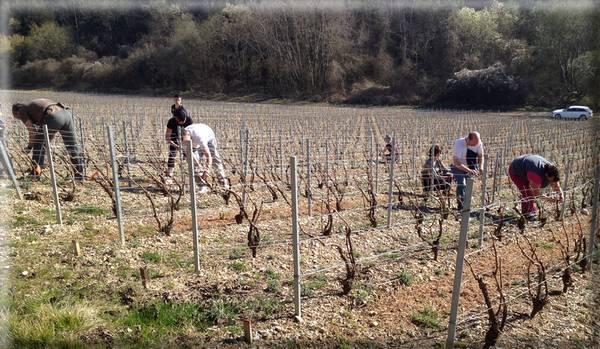 Champagne Baroni - liage - Merrey-sur-Arce